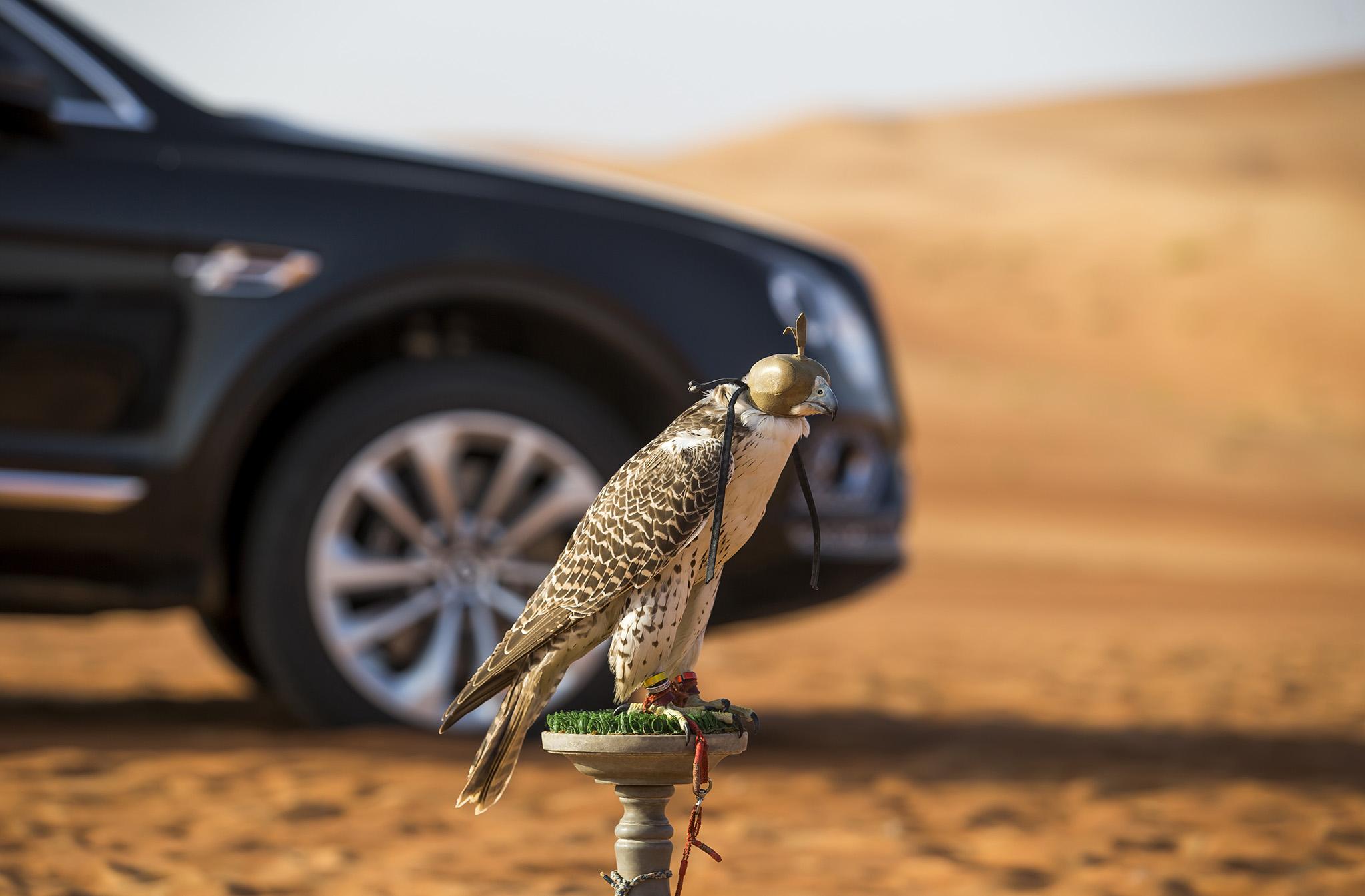 خودروی خاص بنتلی برای پرندگان اشرافی