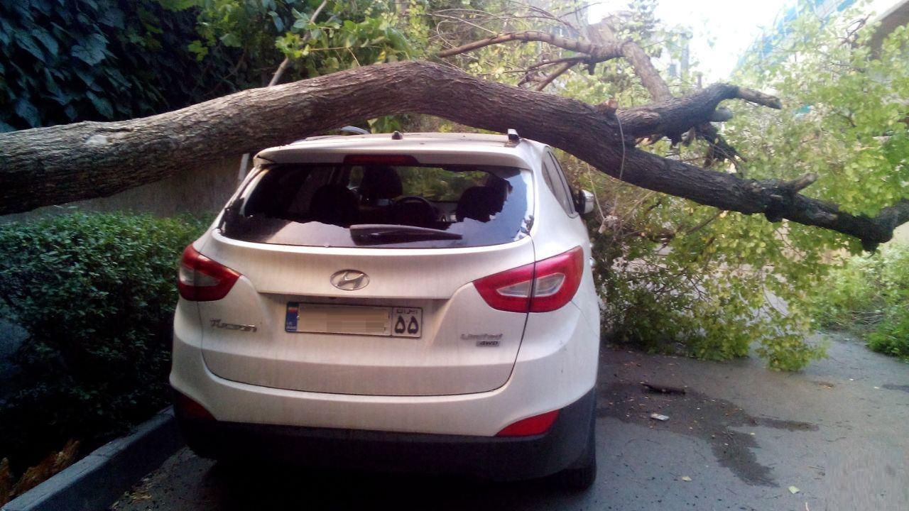 افتادن درخت روی هیوندا