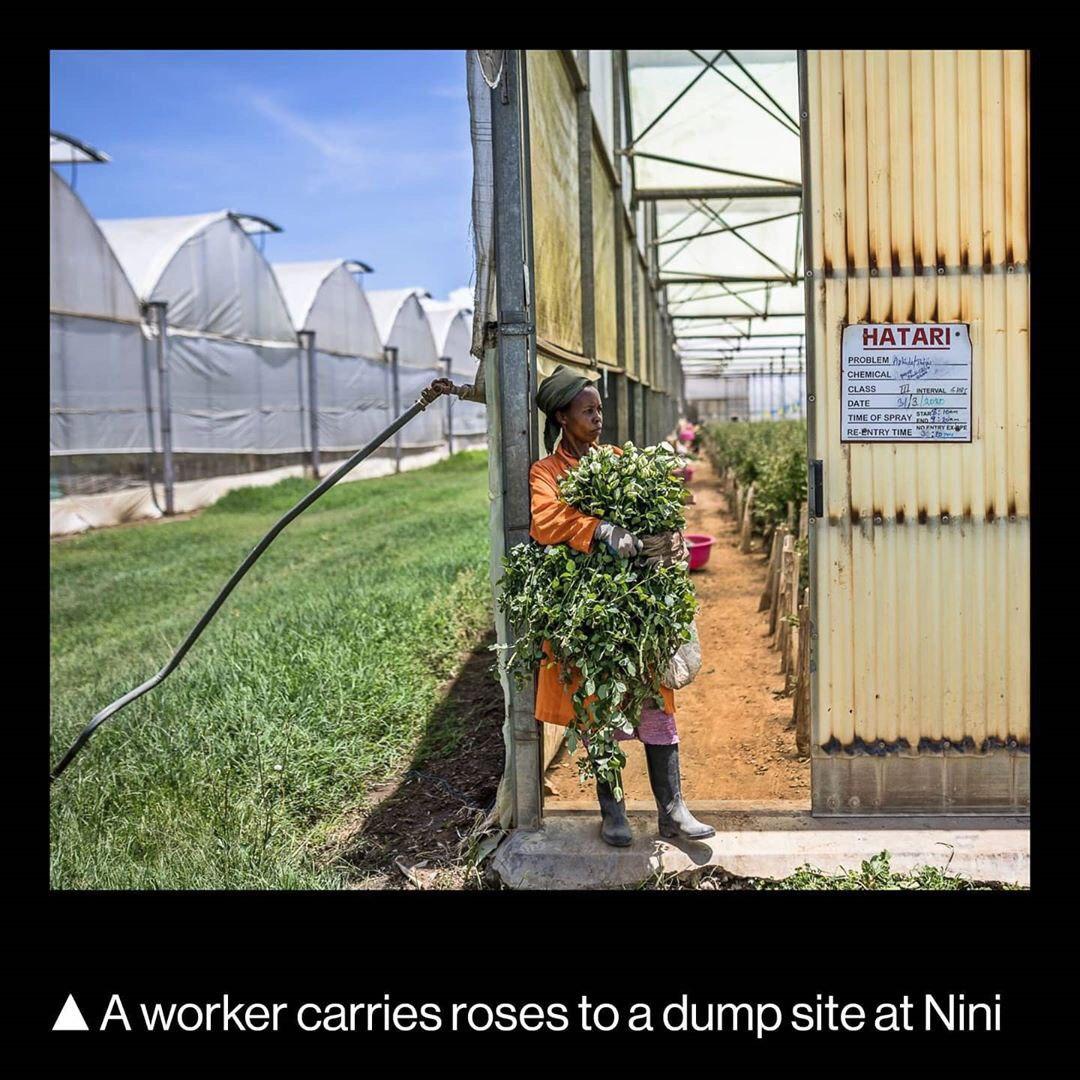 ضرر صنعت گل و گیاه جهان