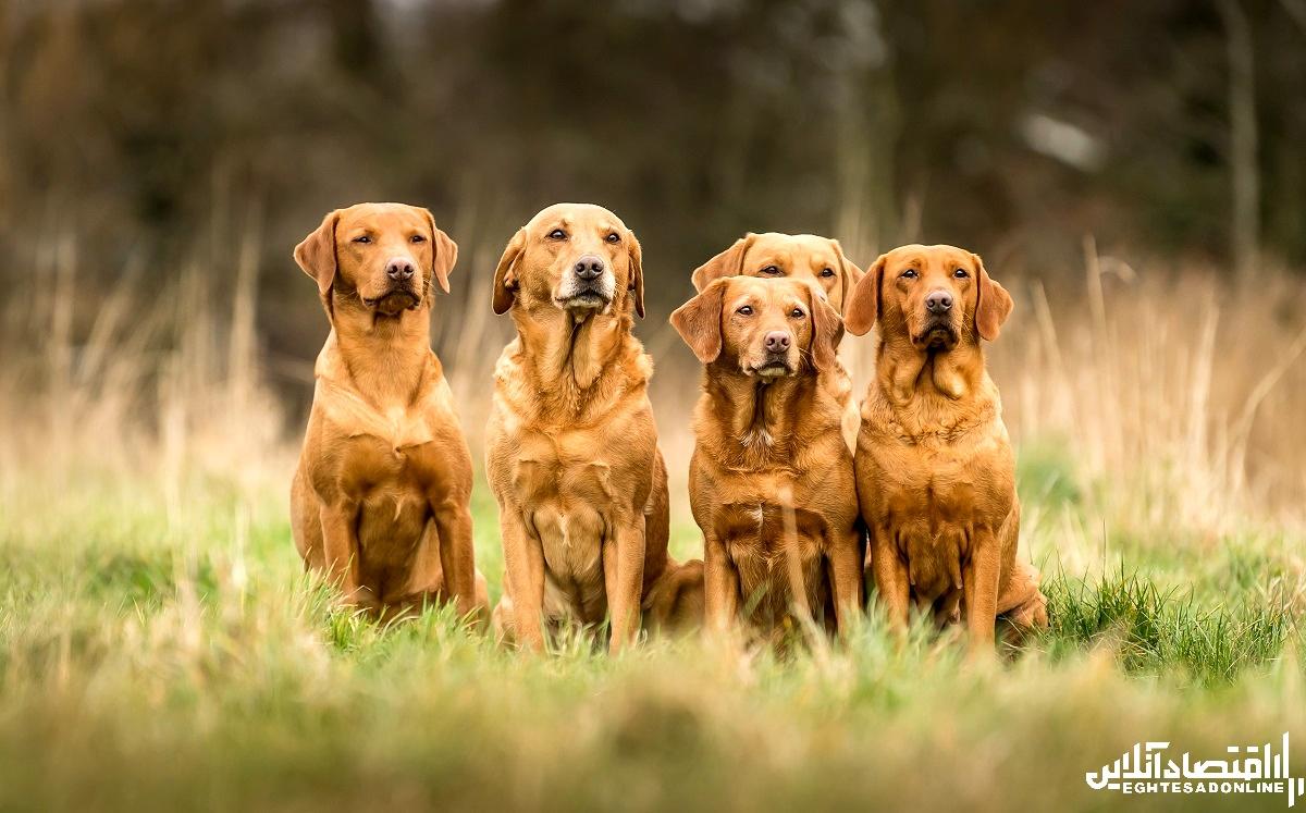 انواع سگ ها