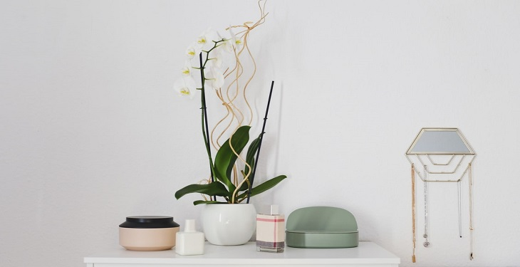 most-beautiful-plants-for-home
