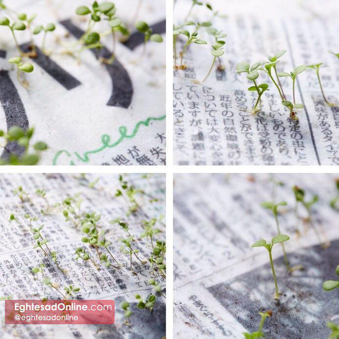 photo_2018-05-17_23-46-39
