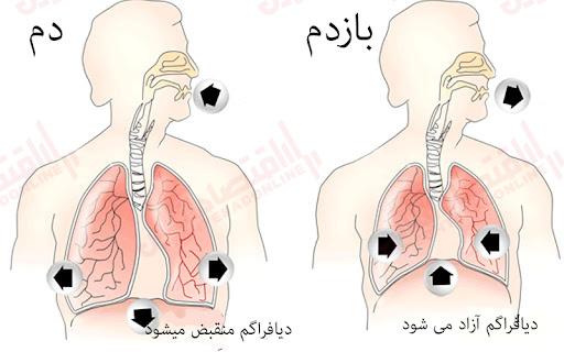 تنفس دیافراگمی ریه