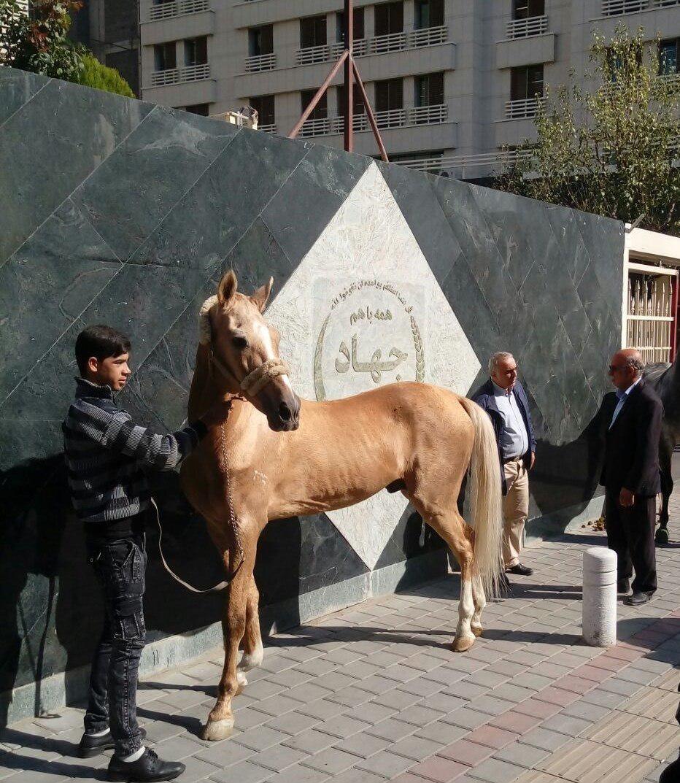 رهاسازی اسب