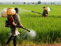 پایش بیماریهای نباتی در مناطق سیلزده