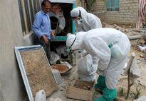 ۹ استان درگیر آنفلوآنزای حاد پرندگان
