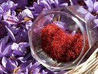 قیمت زعفران از 15 روز آینده کاهش مییابد/ افزایش عرضهها با شروع فصل برداشت