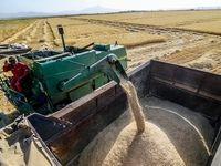 قیمت 3برابری گندم درکشورهای همسایه تهدیدی برای قاچاق