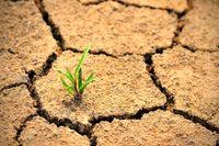 اعتبارات کشاورزی در لایحه بودجه۹۸ شفاف نیست