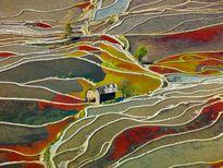 شالیزارهای برنج چین عکس روز نشنال جئوگرافیک