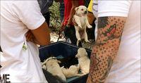 جمعه بازار سگهای اشرافی!