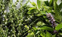 ضد ویروسهای گیاهی!