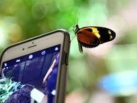 نمایشگاه پروانههای زنده +تصاویر