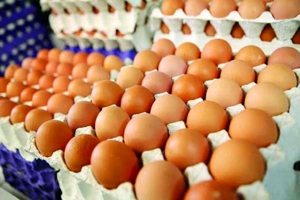 واردات تخم مرغ منتفی شد