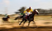 جشنواره اسب اصیل عرب در اهواز +عکس