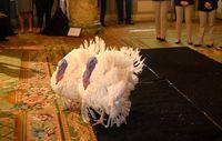 هتل مجلل بوقلمونهای جشن شکرگزاری کاخ سفید +عکس