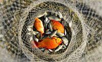 ماهیهای کف رودخانه +عکس