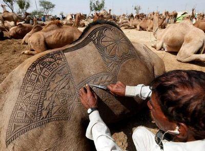 اثر هنری بر تن حیواناتی که قرار است قربانی شوند! +عکس