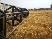 ۲۵۰ هزارتن گندم و آرد صادر شد