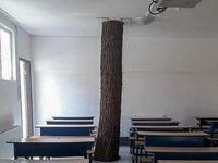 درختی که همپای دانشآموزان درس میخواند +تصاویر