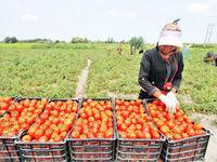 گره گشایی از مشکلات کارآفرینی در بخش کشاورزی