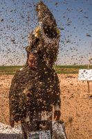 دفن شدن مرد عربستانی زیر دهها کیلوگرم زنبور عسل! +عکس