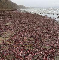 هجوم ماهی عجیب به ساحل سانفرانسیسکو +تصاویر