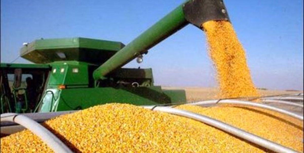 افزایش شدید قیمت خوراک دام در جهان