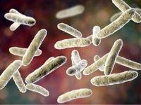 پروبیوتیکهای مرده هم برای مقابله با التهاب مفیدند