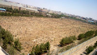 ٤٩هزار درخت از بین رفت