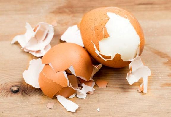 تاثیر پوست تخم مرغ در رشد و ترمیم استخوانها