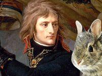 چرا خرگوشها به کابوس ناپلئون تبدیل شدند؟