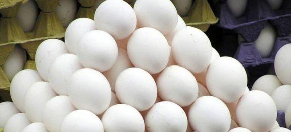 عرضه گسترده تخممرغ در میادین و فروشگاههای زنجیرهای