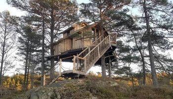 خانه درختی که تبدیل به هتل شد +تصاویر