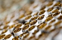 بهار احتکارکنندگان سیگار در تابستان