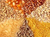 دردسر جدید دامداران/ افزایش قیمت ادامه دار نهادههای داخلی!