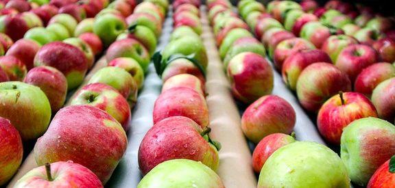ذخیرهسازی 700هزار تن سیب برای عید/ جایگاه چهارم ایران در جهان در تولید سیب