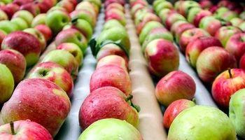 صادرات سیب رکورد زد/ تشکیل