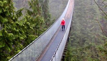 شگفتانگیزترین پلهای سراسر جهان +تصاویر