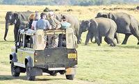 چرا سریلانکا برای توریستها جذاب است؟