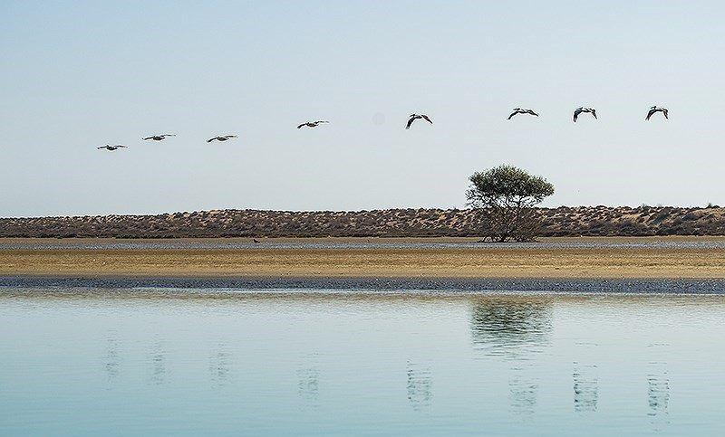 بندر تنگ سیستان و بلوچستان +عکس