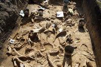 کشف اتفاقی قبرستان دایناسورها در سیبری +عکس
