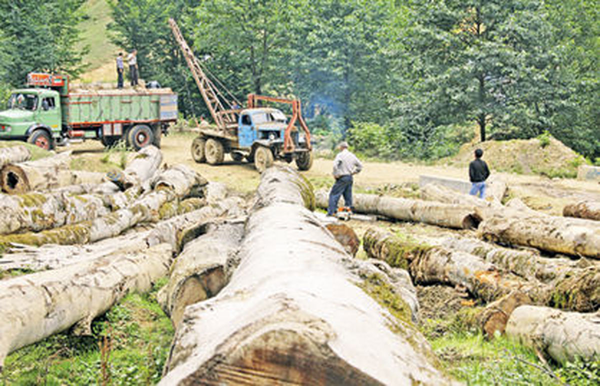 بهرهبرداری اقتصادی جنگلها را از پا درآورد یا خصوصیسازی؟