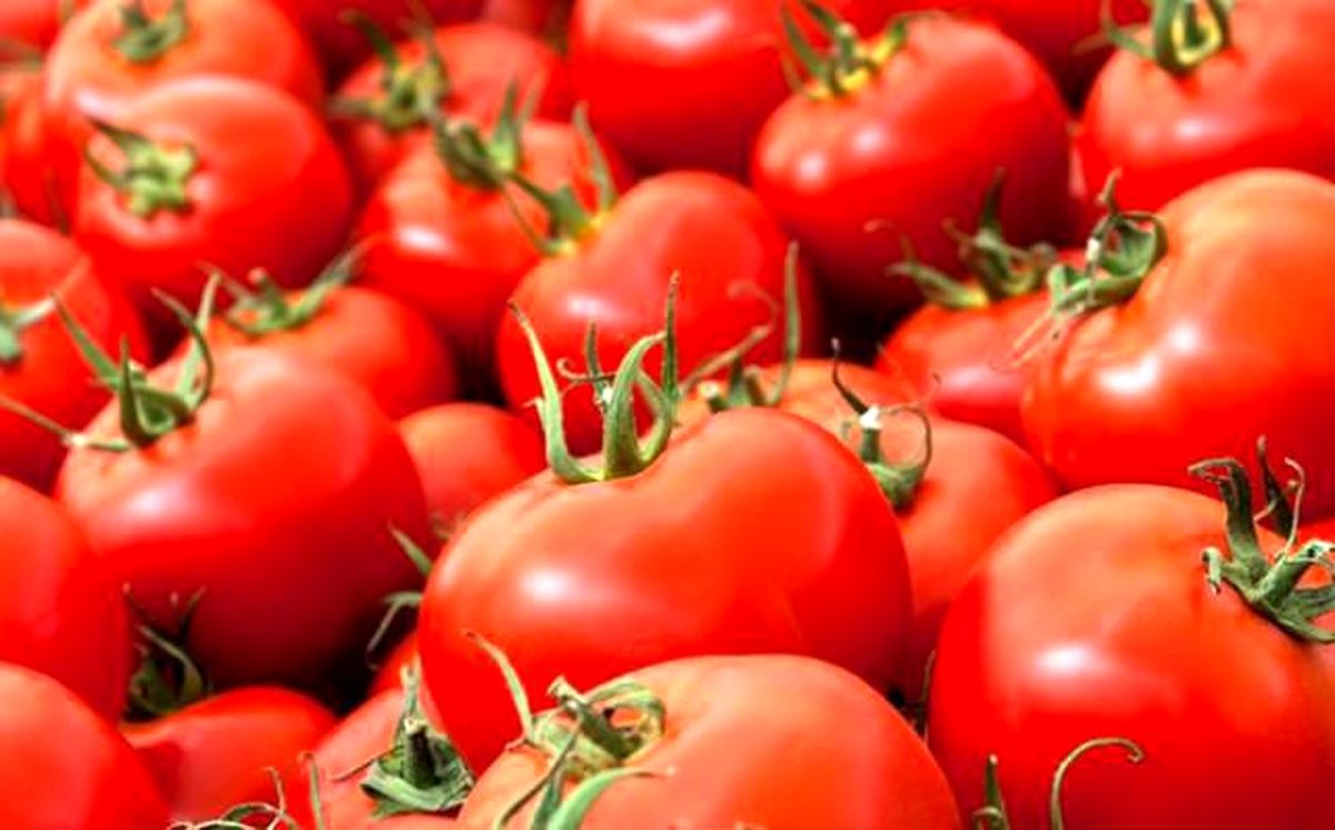 ۲۷۴تن گوجه فرنگی قاچاق توقیف شد
