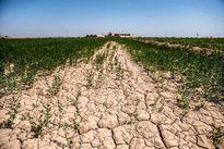 انتقال خاک به خارج از کشور ممنوع شد