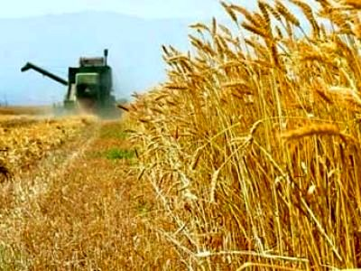 کاهش یارانه بخش کشاورزی چه تبعاتی دارد؟