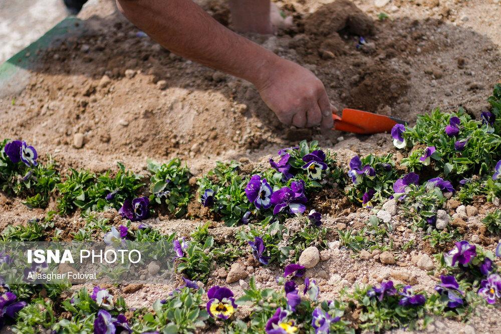 حال و هوای بهار