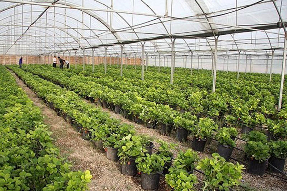 صادرات محصولات باغی مهمترین جایگزین نفت است