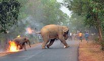 فرار فیلها از آتش نامزد بهترین عکس حیاتوحش جهان +عکس