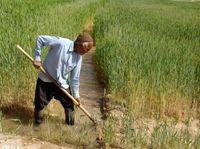 کشاورزی سنتی از چالشهای اقتصاد کشور است